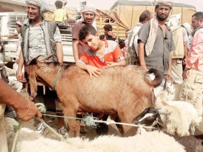 """بلغ سعره ربع مليون ريال يمني..شاهد صورة """"تيس"""" أضحية العيد بأبين"""